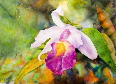 "Ross Barbera, ""San Francisco Orchid,"" watercolor on paper, 22"" x 30"", 2017"