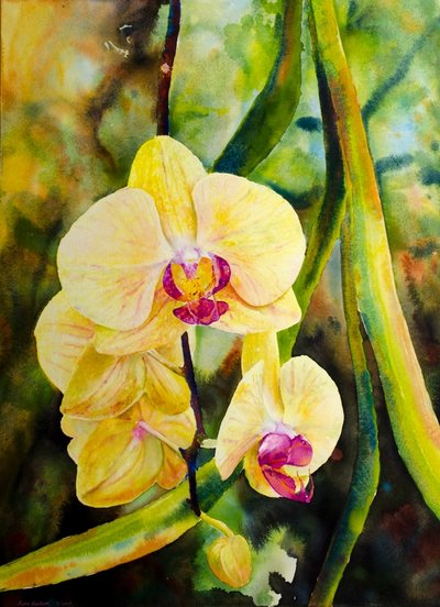 "Ross Barbera, ""Phalaenopsis Orchids,"" watercolor on paper, 30"" x 22"", 2017"